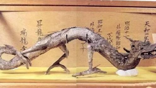 日本寺庙收藏真龙标本,原本是中国农民发现,难道真的有龙?
