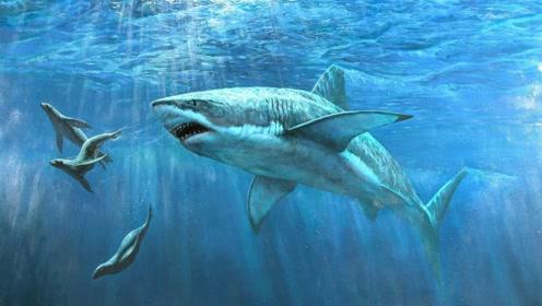 这种鱼不仅能杀死鲸鱼,还敢主动攻击潜艇