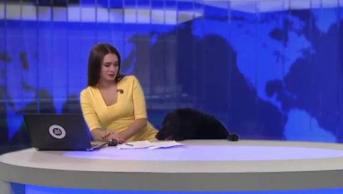 美女主持新闻直播时突发意外,本以为会被骂,没想到因为它一夜爆红