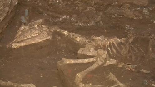龙在中国历史上是否存在过?河南惊现千年古墓,揭开龙的谜团!