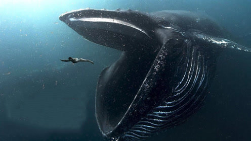 如果人被鲸鱼吞下肚子,会发生什么?