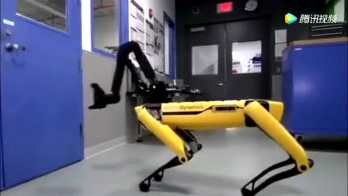 机器狗都会叫帮手了,未来世界是他们的
