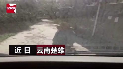 货车压到石头被村民拦截,搬凳子堵路中间,民警规劝遭挑衅