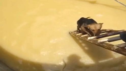 狗狗失足掉进水井里,好心人搬来梯子,成功将它解救!