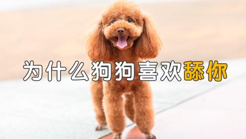 狗狗为什么这么爱舔人,有多种含义!你都知道吗?