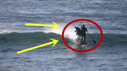 男子正在海上划船,突然游来一群海豚,直接将男子顶下水!