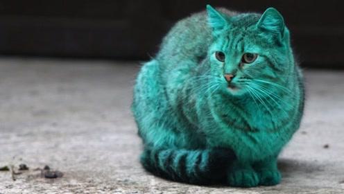 绿色的猫咪见过吗?只因这个原因,从头绿到脚