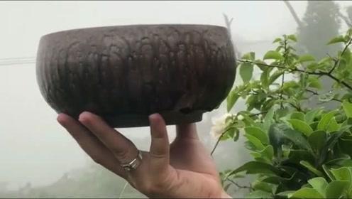 我家祖传的茶盏,可以在北上广换一套房子吗?