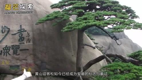 我国目前最值钱的两棵树,一棵被保安24小时看守,一棵投保上亿元