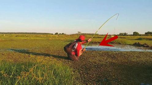 野钓:长竹竿钓大鱼,钓友卖力拉杆,下一幕收获让人看着都激动