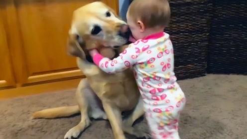 狗子和宝宝在沙发上,宝宝突然放屁,狗子的反应让人哭笑不得