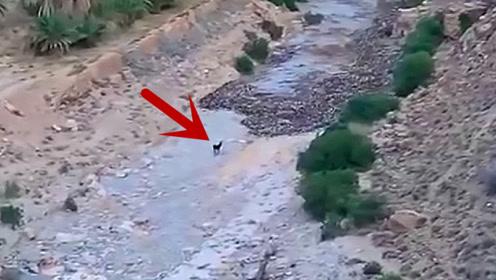 一头驴遇到危险的泥石流,竟淡定站在原地观望,镜头拍下惊险瞬间