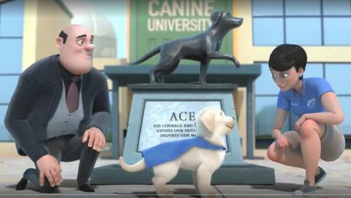 狗狗身材矮小,成不了真正的导盲犬,就在危急时刻变成英雄