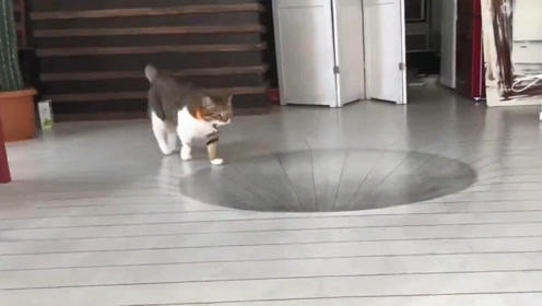 在地上画3D大坑骗猫,结果被猫咪一秒破功,网友:心疼铲屎官