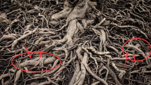 男子盖房挖到怪树根,散发香味像是宝,专家:建议上交!
