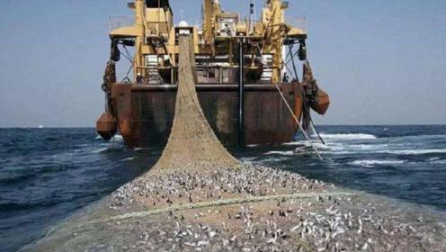 世界上捕鱼最多的渔船,一艘造价4亿元,最多一次能捕鱼300吨