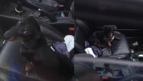 男子意外被锁汽车外 宠物狗奇迹般地帮忙打开车门