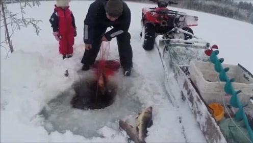 河面开洞捕鱼,一网下去全是大家伙,真是越拉越兴奋