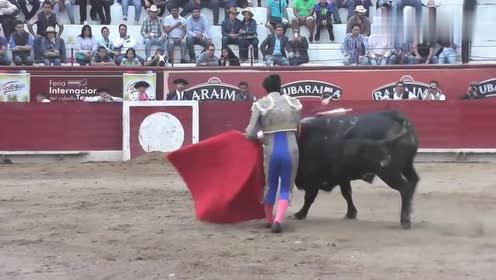 与牛共舞,玩转全场!斗牛士疯狂斗牛,耍的公牛团团转