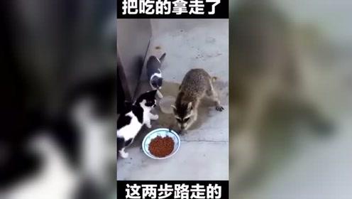 给这两个猫咪整傻了?咱也不敢说,咱也不敢问!