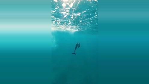 实拍海豚跃出水面的精彩瞬间,这也太美了吧