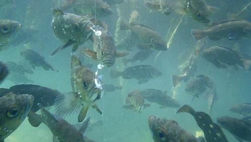 钓鱼:水中拍摄,海底里有很多鱼