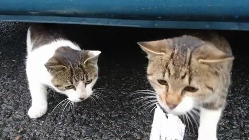 流浪猫躲雨没吃的,网友好心投喂,小家伙急的狼吞虎咽抢食!