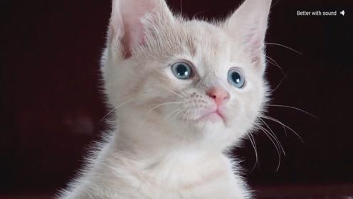 如果世界上没有了猫会怎么样?