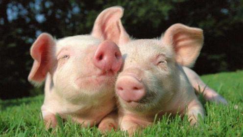 """与属猪人""""最般配""""的2大生肖,在一起同甘共苦,婚后越来越""""富有"""""""