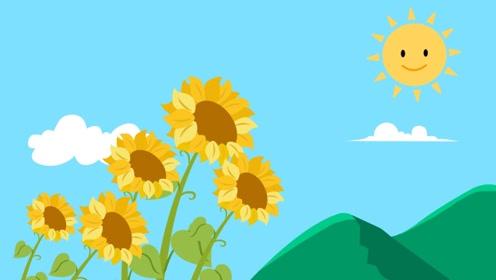 向日葵大家都熟悉,它总是朝向太阳,真的只是因为喜欢阳光吗?