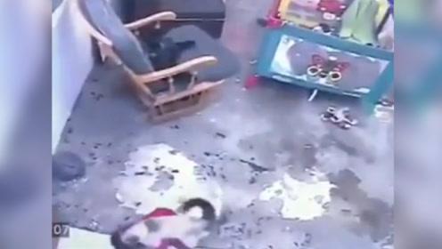 神猫救主! 家猫一个飞扑阻止小孩摔下楼梯