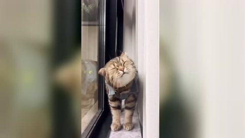 啊呜,我是只大老虎呦。