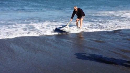 """一条小鲨鱼搁浅在沙滩,老人正准备上前营救,不料是个""""白眼狼"""""""