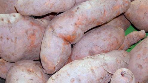 原来红薯保存这么简单,不变质不发霉,越放越甜,方法简单实用