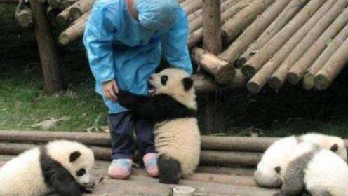 """大熊猫为什么总爱抱饲养员的""""大腿"""",专家说出多年疑惑!"""