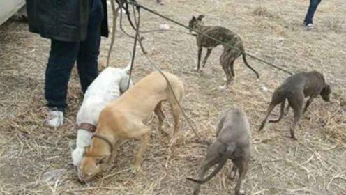 主人带6只猎狗去打猎,路过一块大石头,猎狗突然全部失控了