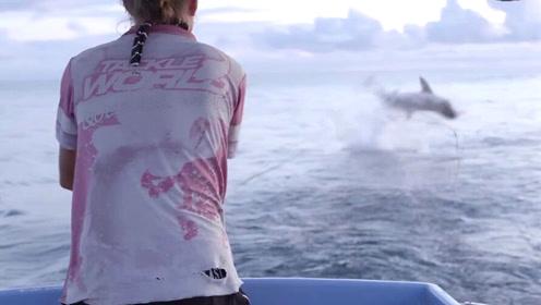 夫妇捕到30公斤鲭鱼正拉上船 下一秒鲨鱼跃起抢食
