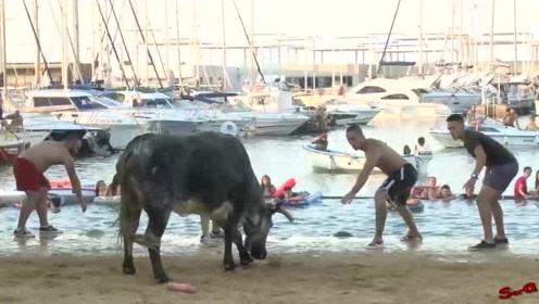 国外一群富二代为寻求刺激,居然组织了一场大型斗牛现场,真是作死啊