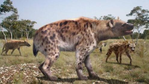 """远古时期的""""非洲二哥"""",重达300多公斤,可一口将狮子咬死"""