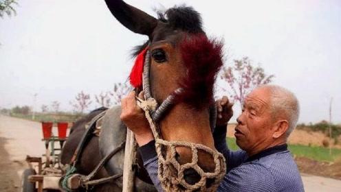 一个驴价值一万元,驴皮也能卖几千元,为啥很少有人养呢?