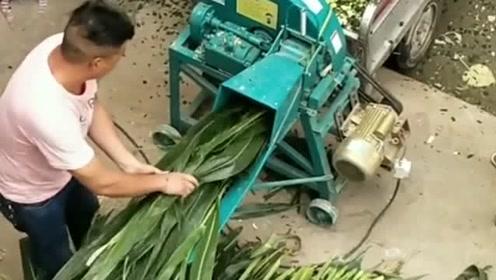 自从老公买来了这个电动铡草机,铡草就没我什么事了,两个人活一个人干!
