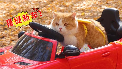 """带橘猫去银杏林爬树,却意外喜提""""跑车""""一辆!"""