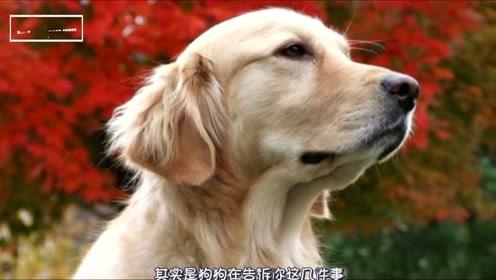 狗狗为啥喜欢舔主人的手,其实它是向你传达这些事情,看完后全明白了