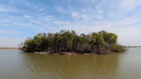 实拍东营黄河口湿地生态公园,广袤的湿地环境优美