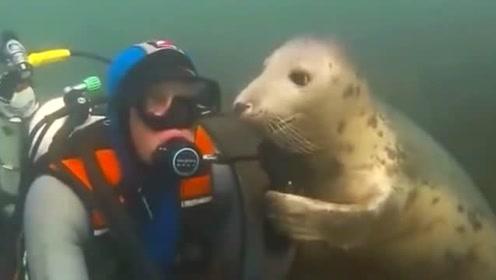 潜水员在海底遇到一只求撸的海豹,无奈之下只能乖乖服从安排了