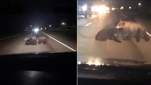 黑熊宝宝被撞伤妈妈路中拖救 路过女司机见状哭喊到声嘶力竭