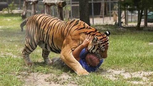 咬伤人的老虎为什么一定要杀掉,专家的解释,令人不寒而栗!