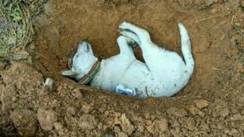 为什么说狗狗死后千万不能埋?原来并非迷信,是有科学依据的!