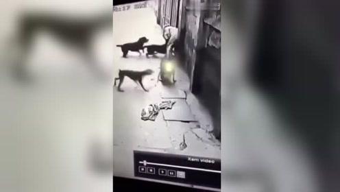 一男子被狗集体围攻,危机时刻,来救的人真勇敢!一万个赞