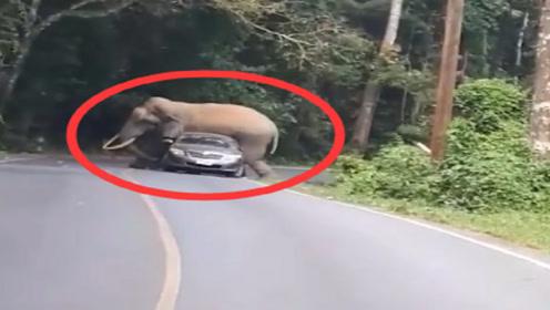 """男子开车回家遇到大象,直接被""""泰山压顶"""",镜头记录全过程"""
